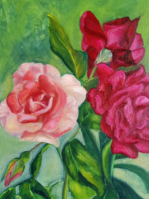 Morning Roses