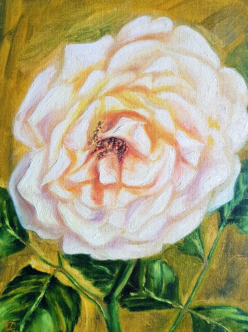 Chandos Beauty in Full Bloom