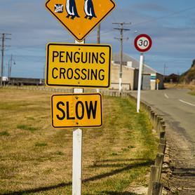NZ-IMPRESSIONS (49 von 66).jpg