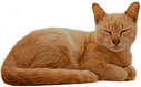 pngtree-cat-sleeping-png-image_3652099_e