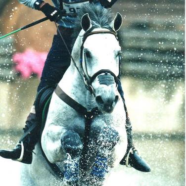 Ralph on the Gray Stallion - Winston.jpg