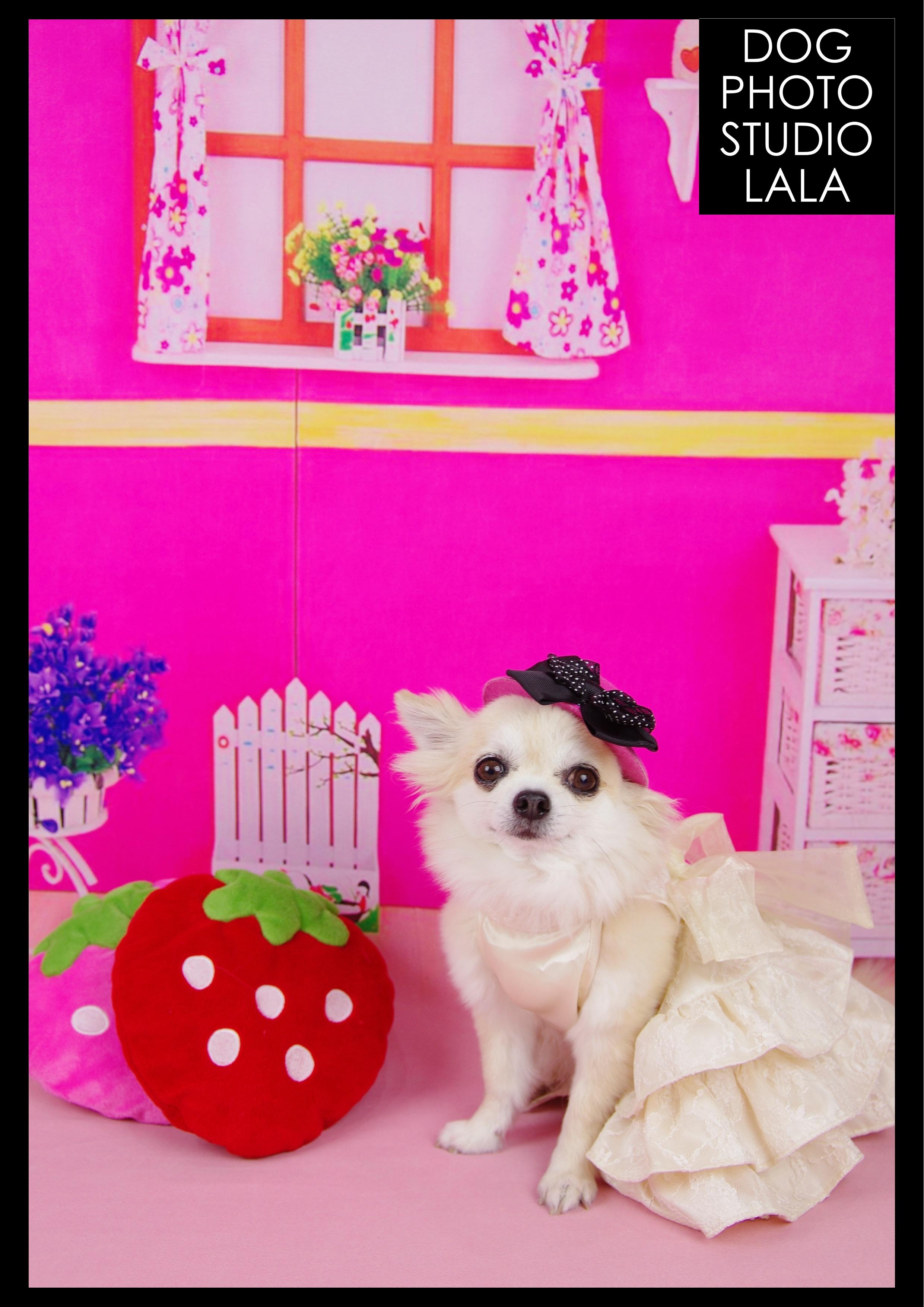 13>ピンクの部屋