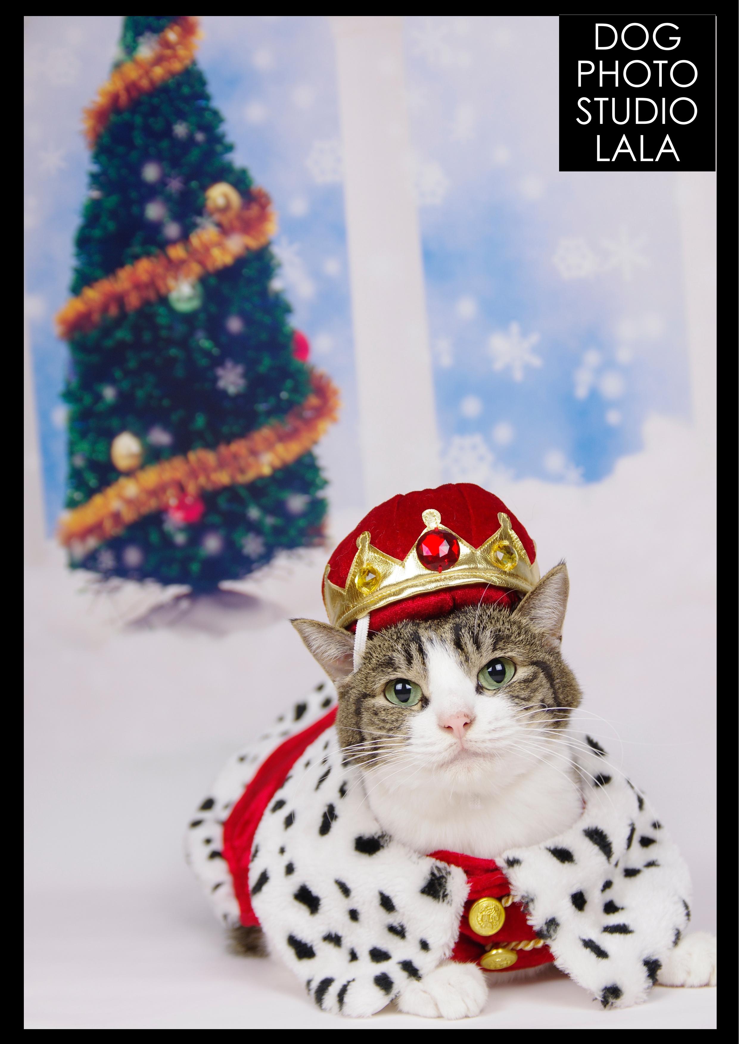 148>クリスマス