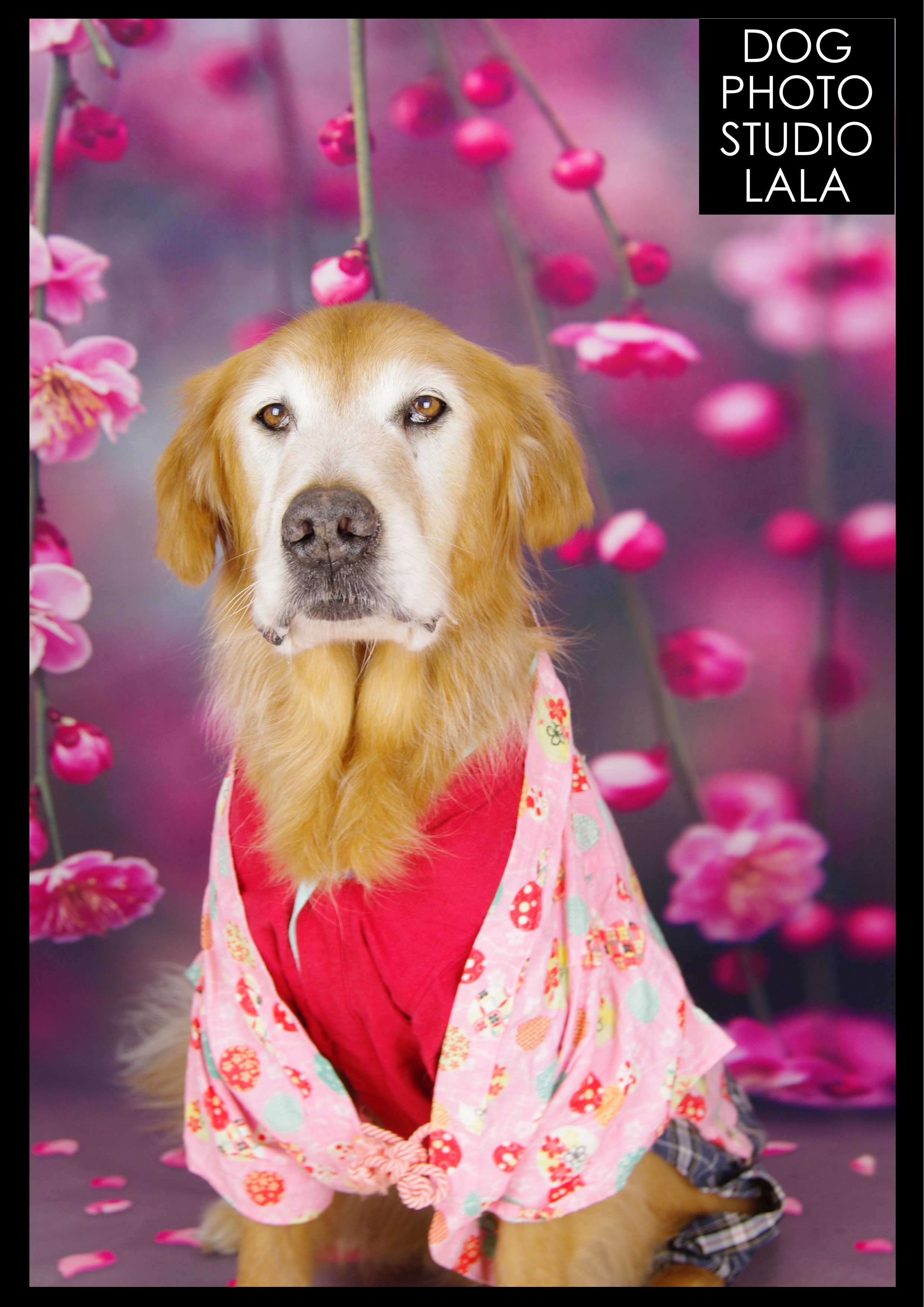 163>梅の花(ピンク)