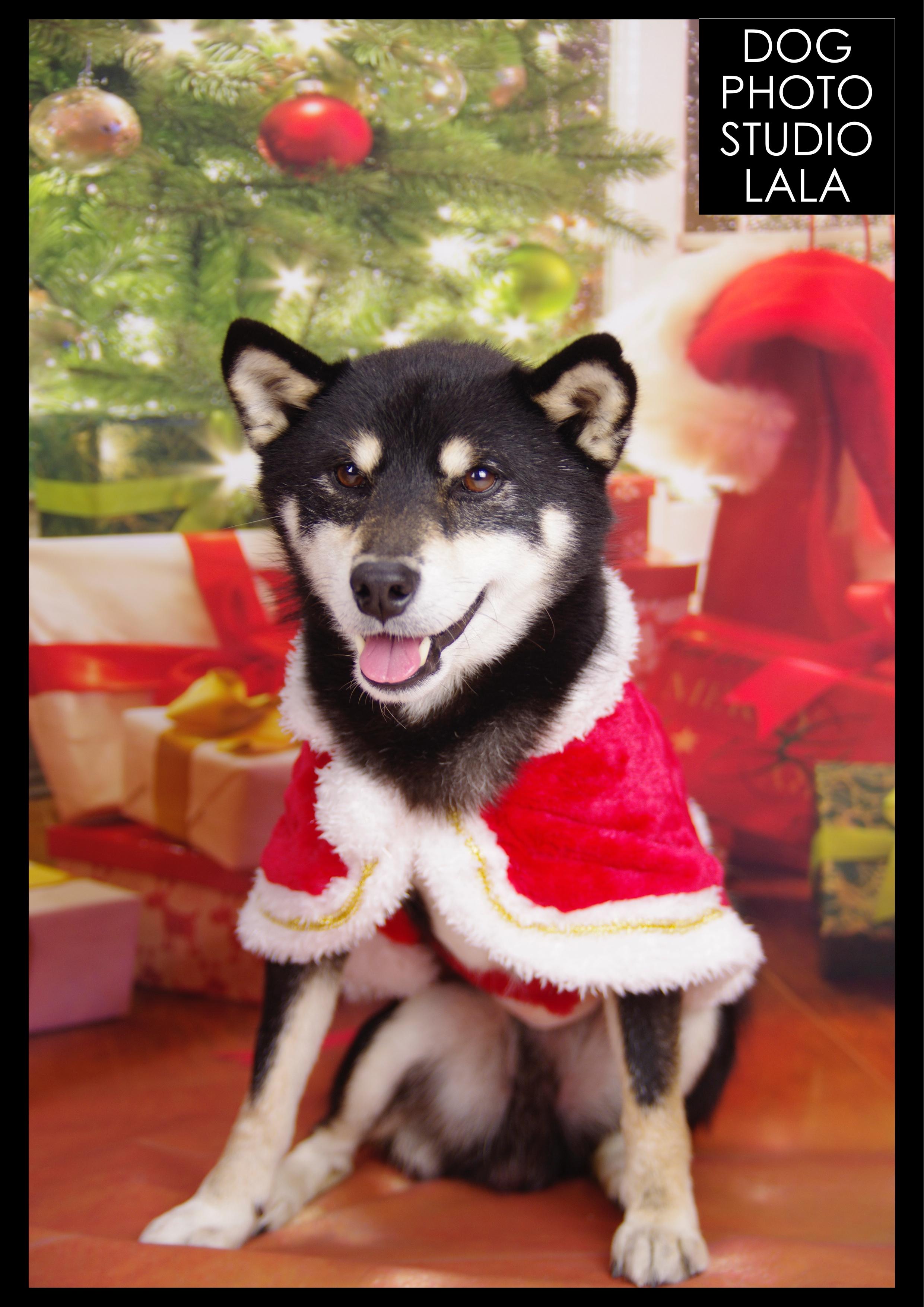59>クリスマス
