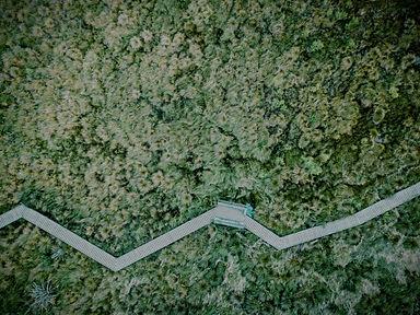 Aerial View of a Field_edited.jpg