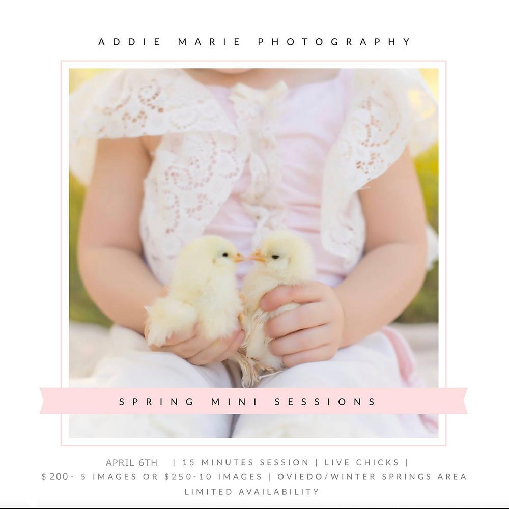 Spring Easter Mini Session - Live Chicks - Orlando