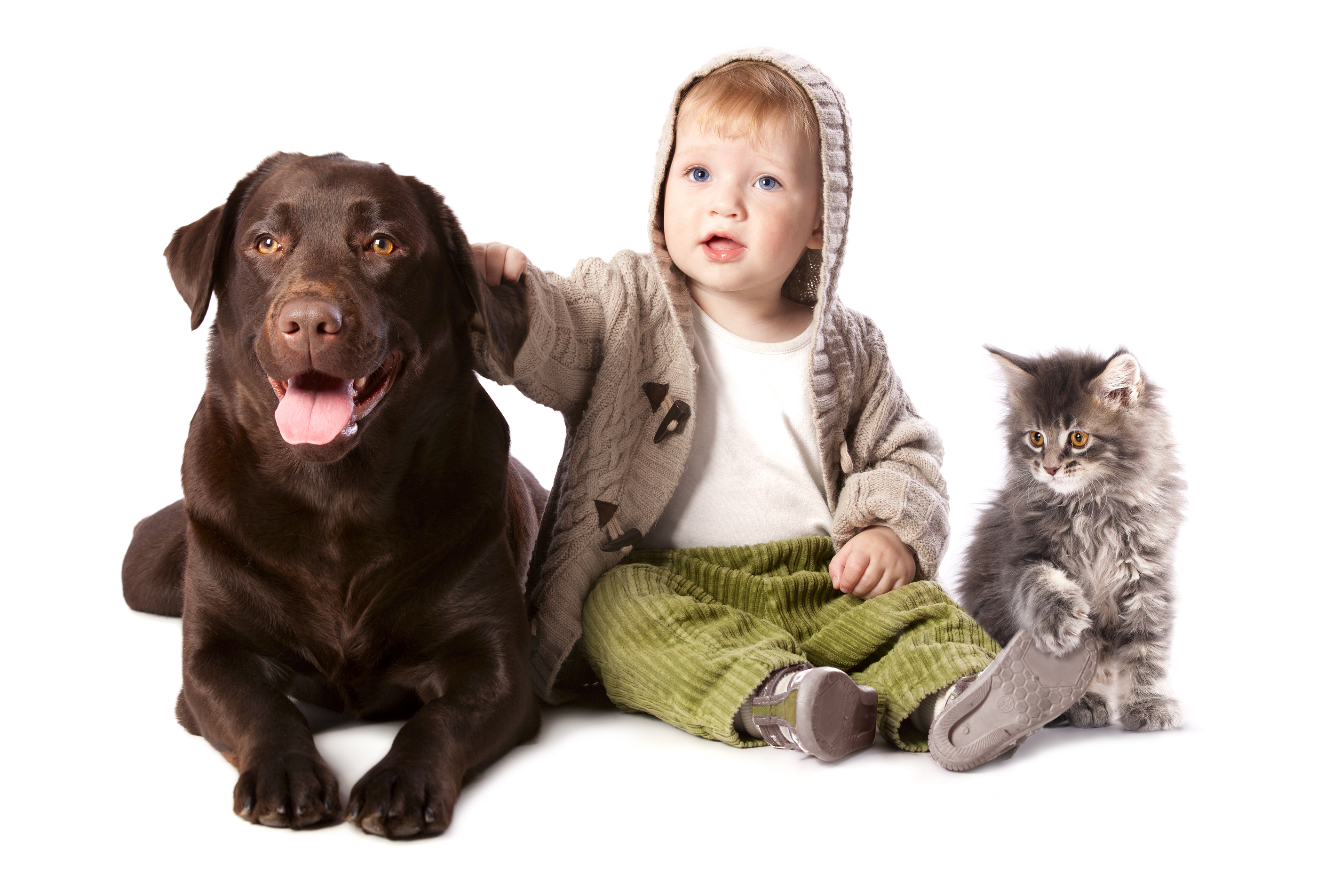 Happy kid with his pets - a dog and a kitten