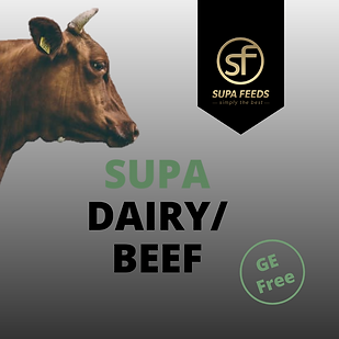 Supa Dairy/Beef, Supa Dairy Beef, cattle feed