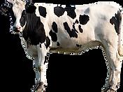 cattle lick block
