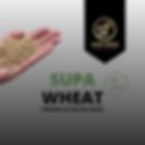 Supa Wheat, Wheat, Wheat nz, GE free wheat