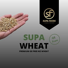 Supa Wheat, Wheat, Wheat nz, GE free wheat