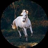 supa feeds horse feeds