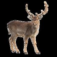 deer lick block