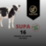 Supa 16 - 16% protein calf meal, best calf mel, calf finisher, texturd calf meal