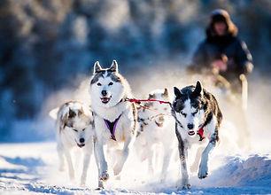Dog-sledding-Jokkmokk-3-1024x737.jpg