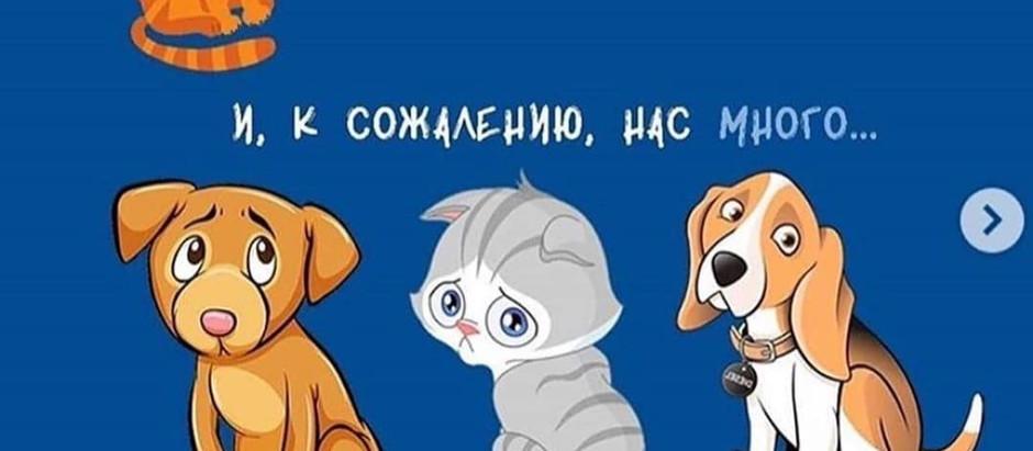 Про коронавирус у собак
