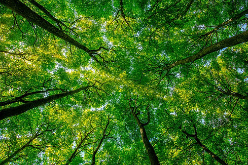 forest-mindfulness.jpeg