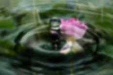 lotus flower coaching marta regina 1.jpg