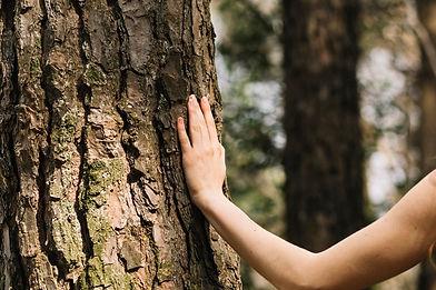 touching-tree-1.jpeg