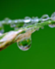 raindrop-1587994.jpg