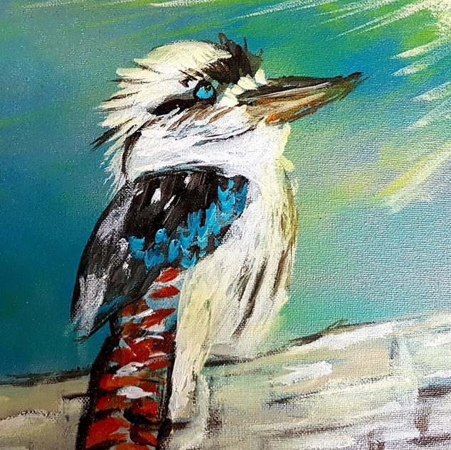 Kookaburra looks to the light