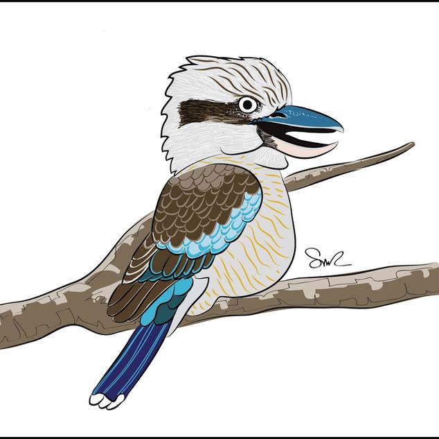 Kookaburra.png