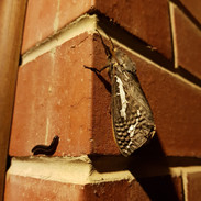 Moth and millipede