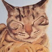 Leonardo the cat