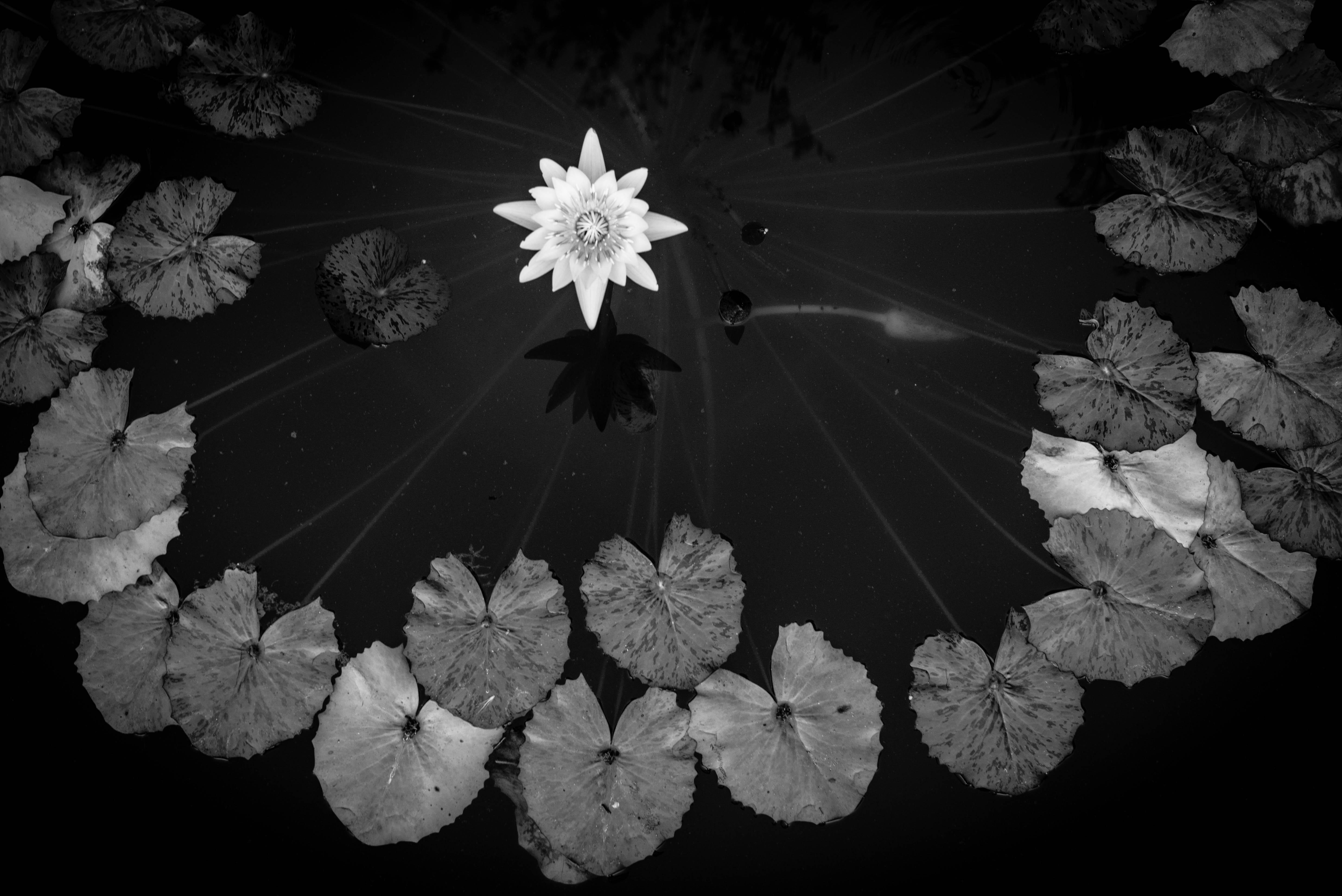 Lotus circle