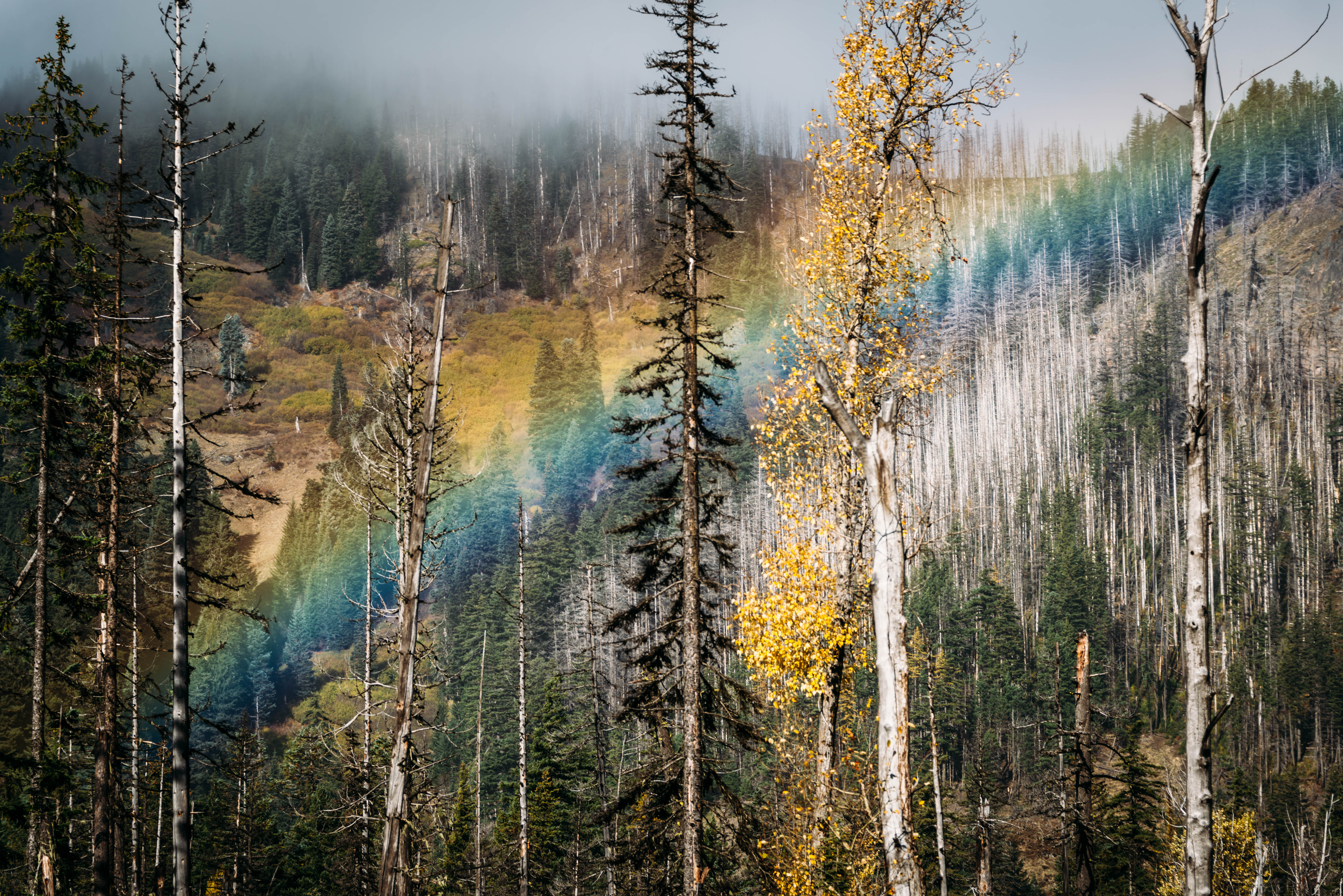 Hood River Rainbow