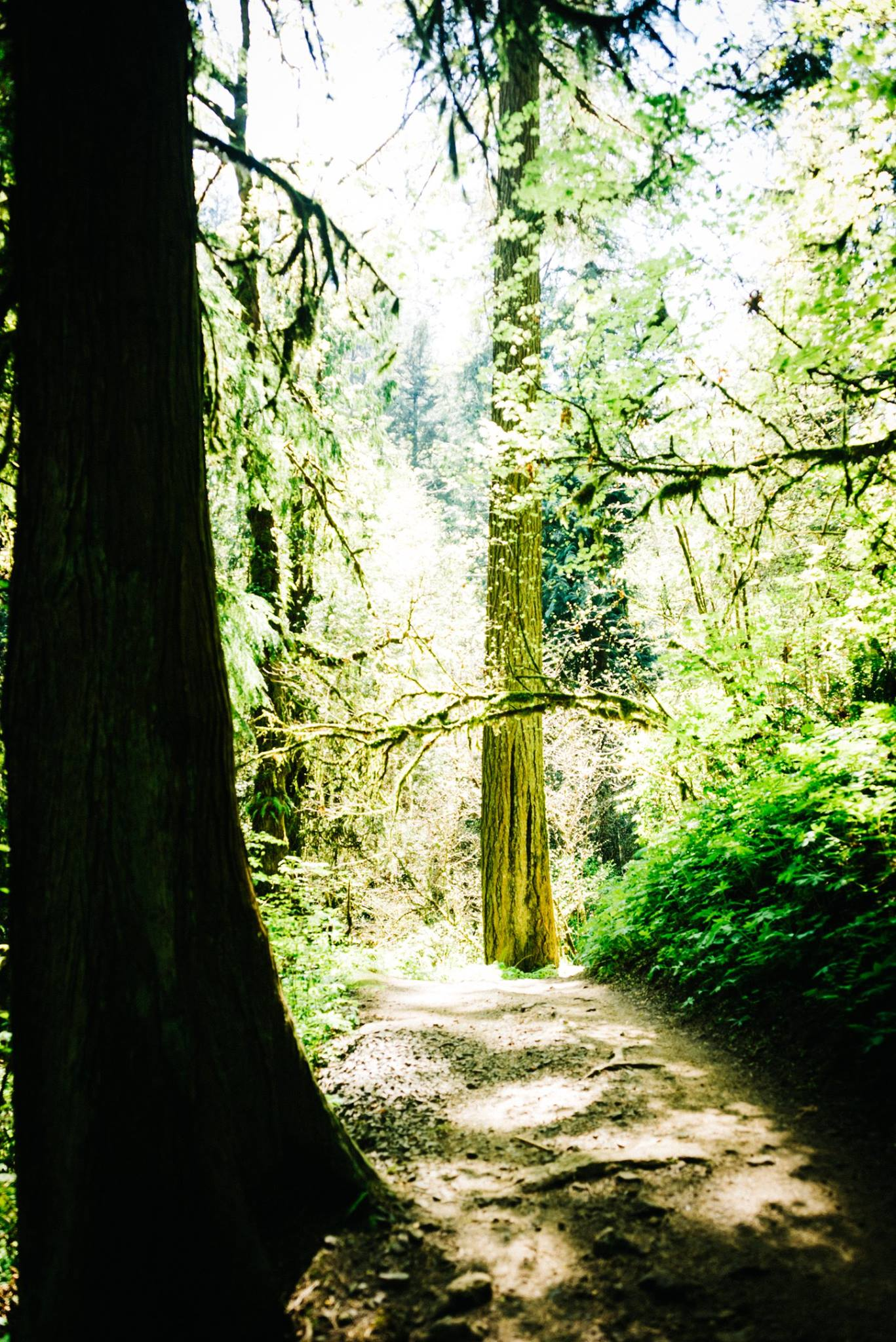 Forest Park, Portland, OR