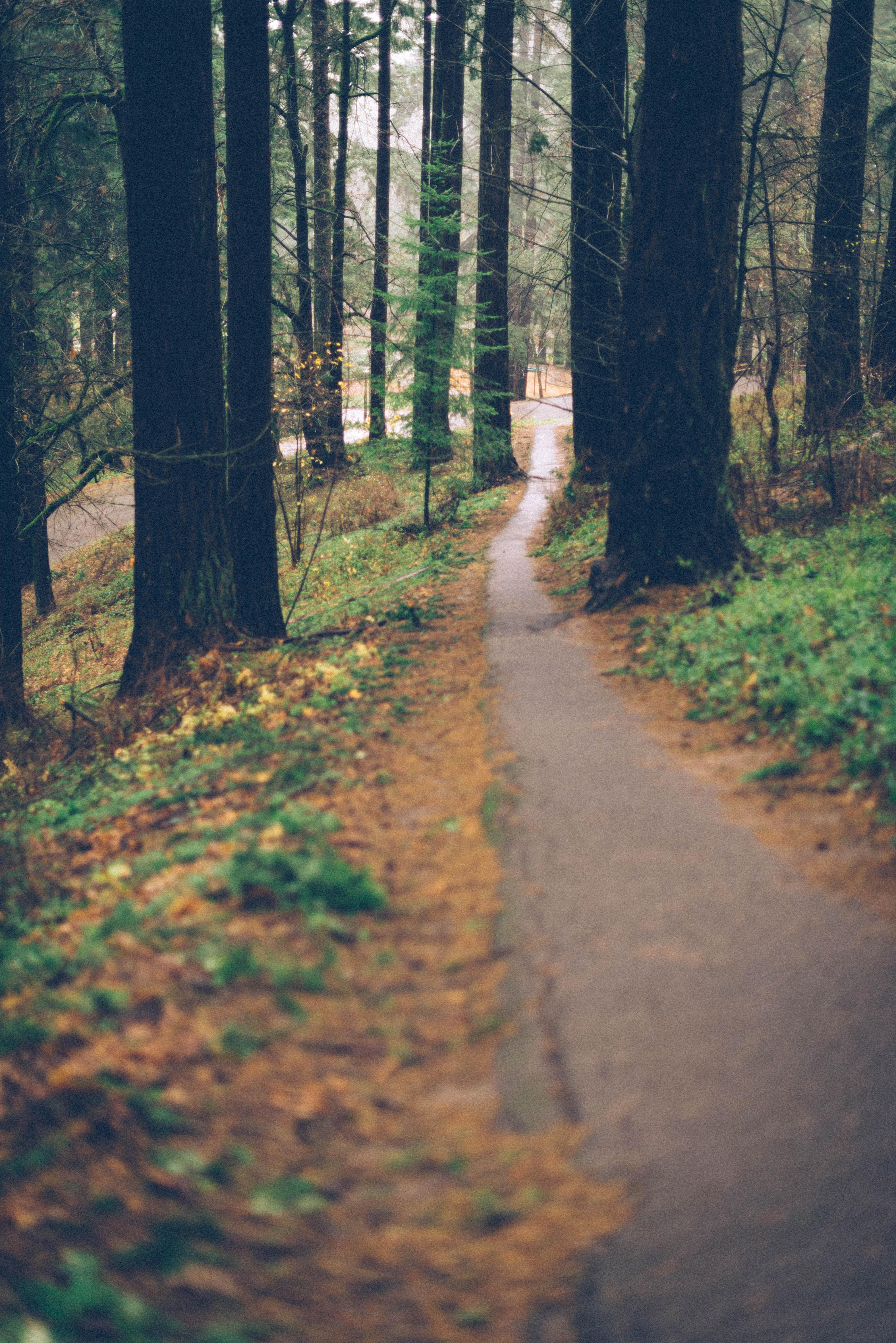 Mt. Tabor Park, Portland
