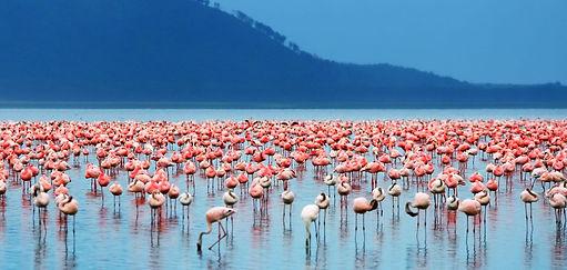 lake-nakuru-national-park.jpg