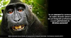 O emblemático caso do primata que se fotografou