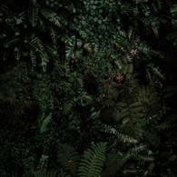 jungle vibe