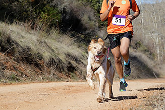 Dog and man taking part in a popular can