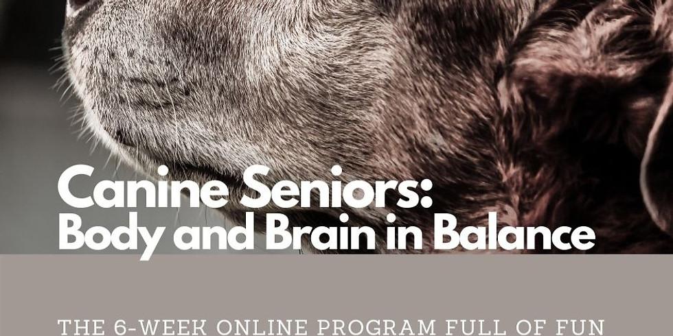 Canine Seniors: Body & Brain in Balance