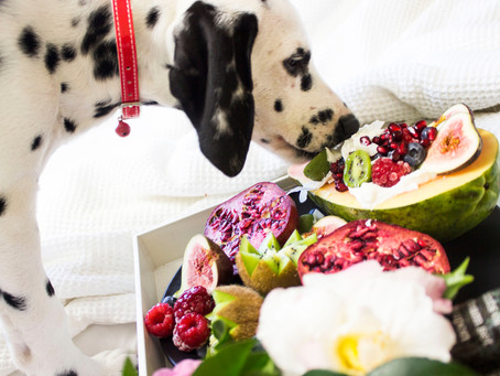 What do orthopaedic issues in our dogs have to do with the food we are feeding them?