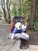 bike carrier.jpg