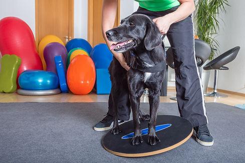 dog balance.jpg