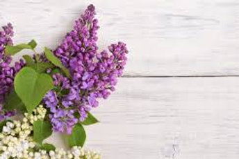 Lilacs in Bloom (in season only April & May)