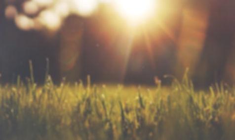 grass flare.jpg