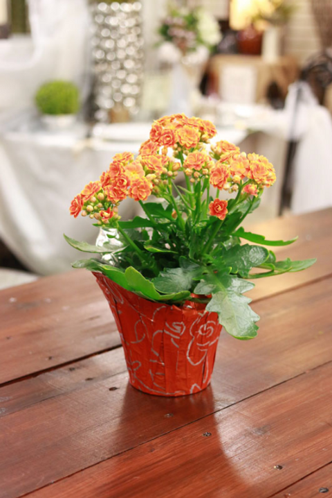 Kalanchoe Cedar Floral