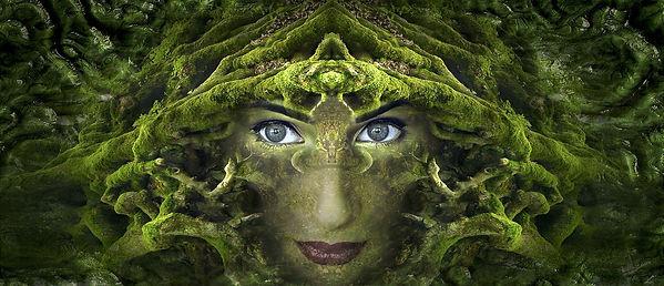 Visage dans une forêt - méditation guidé