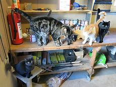 Kattene fodres i fyrrummet