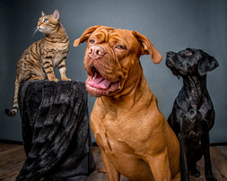 Two Dogs and a Cat