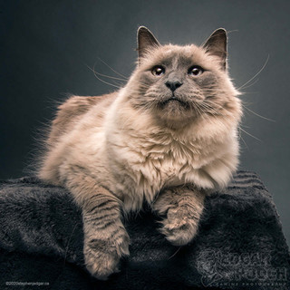 Thumbed Feline