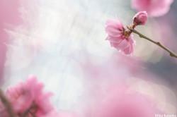 Mika Flower