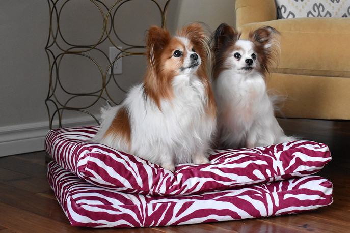 Custom Dog Beds